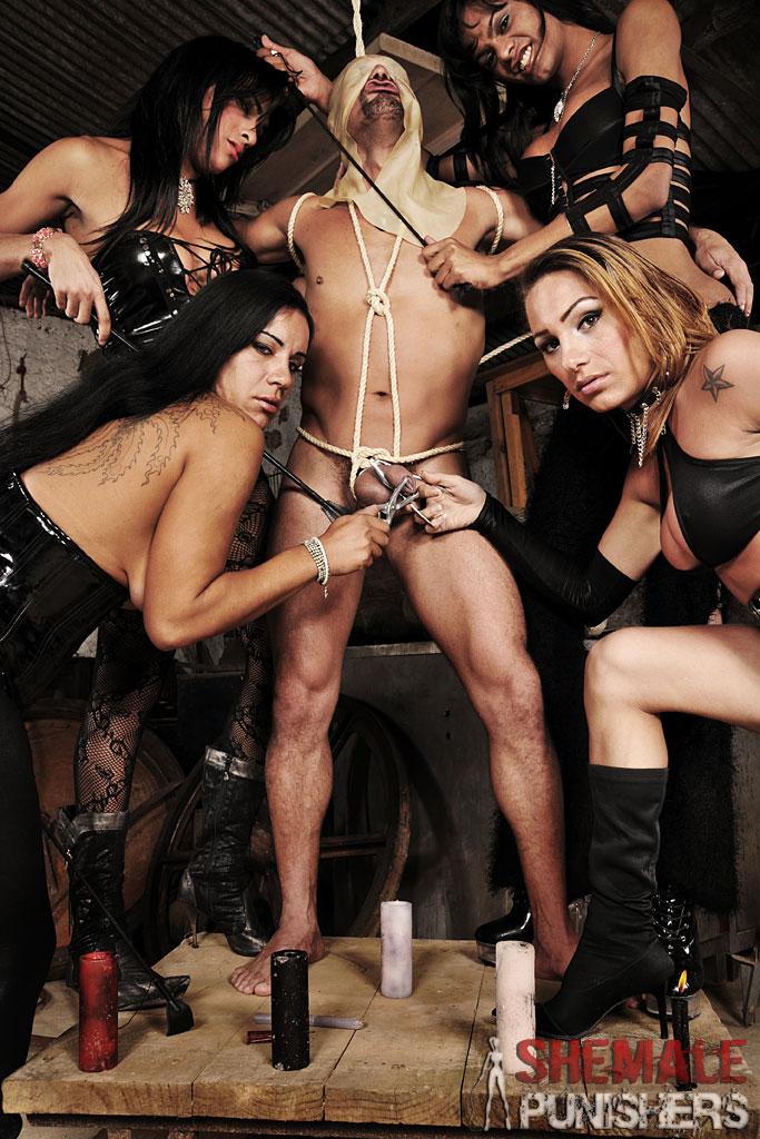 fiesta trans