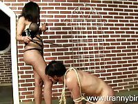 Domination tranny with a submissive toy